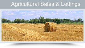 Agricultural Property for Sale